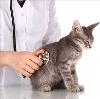 Ветеринарные клиники в Татищево